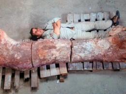 Ископаемые останки существа, которое может оказаться самым крупным из динозавров, когда-либо бродившим по Земле, были обнаружены палеонтологами в аргентинской части Патагонии