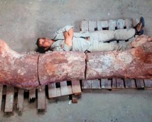 obnaryjeni-ostanki-dinozavrov-krypneiwego-iz-izvestnih