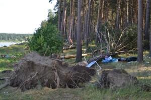 uragan_v_Novosibirske_unes_tri_gizni_(3)